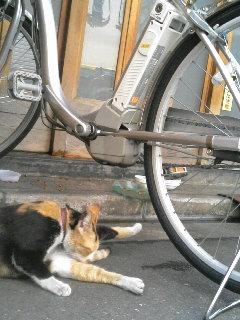 浅草 六区通り裏の猫さん